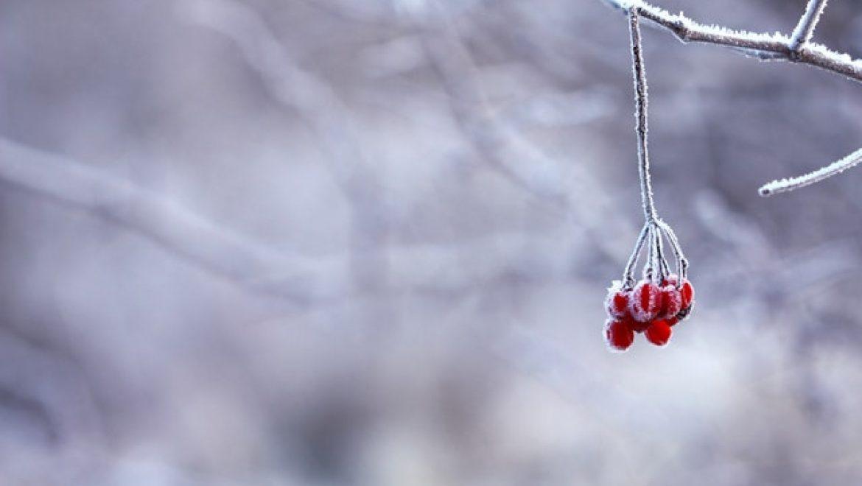מהם הסיבות להצטברות קרח במקפיא?